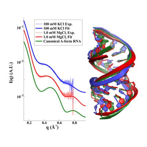 Experimental X-ray scattering curves for RNA duplexes